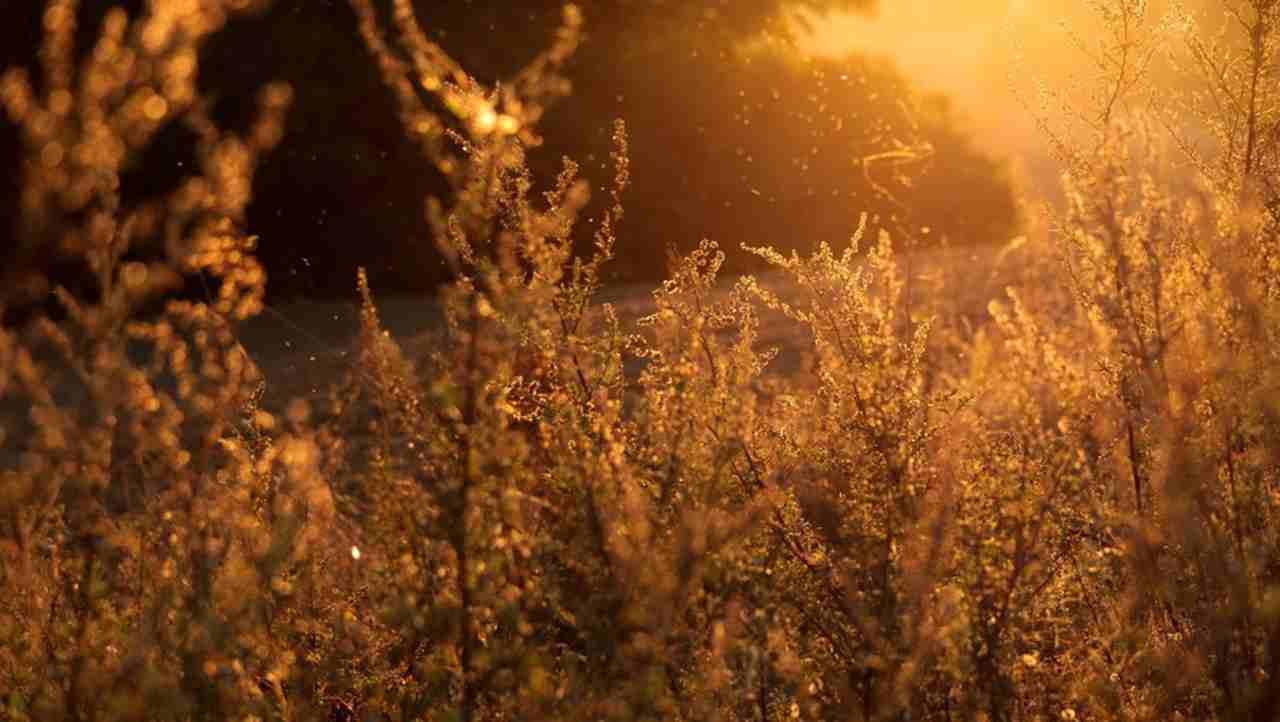 Feinstaub kann zu Allergien führen